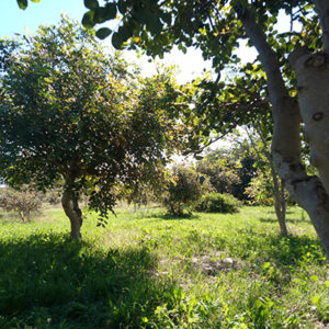 campagna iblea Casale Vinciucci a Modica